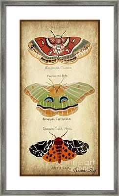 Moth Study Framed Print