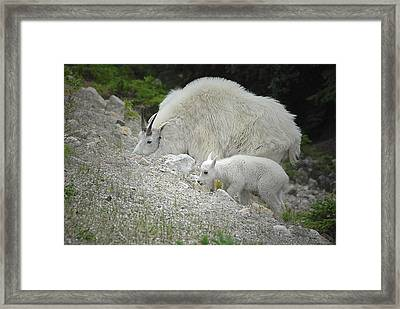 Framed Print featuring the photograph Mother And Baby   by Dyle   Warren