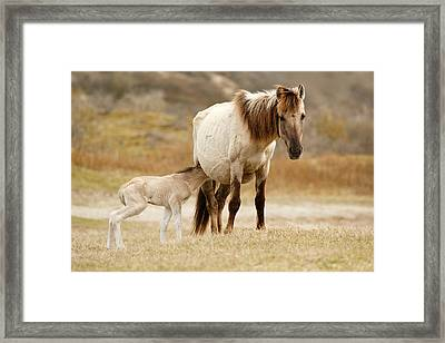Mother And Baby Horse Framed Print by Roeselien Raimond