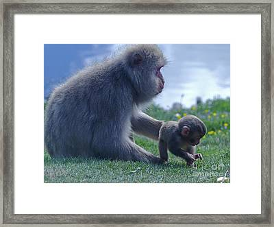 Mother And Baby - Japanese Macaque Framed Print by Phil Banks