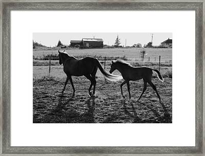 Mother And Baby Framed Print by J D Banks