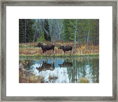 Mother And Baby Moose Reflection Framed Print