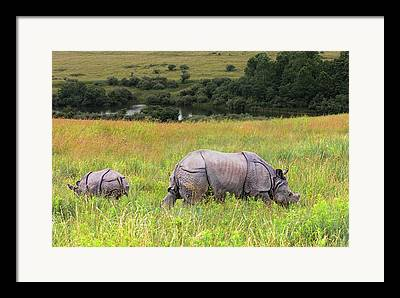 One Horned Rhino Framed Prints