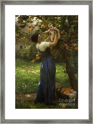Mother And Child In An Orange Grove Framed Print