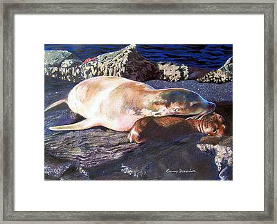 Mother And Child Sea Lion Framed Print by Constance Drescher
