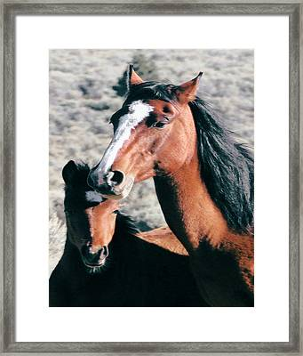Mother And Colt Wild Framed Print
