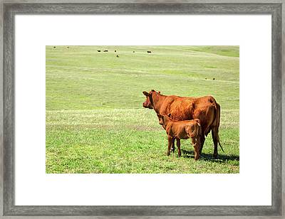 Mother And Daughter Framed Print by Todd Klassy