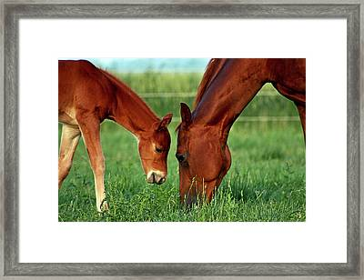 Mother And Foal 3377 H_2 Framed Print