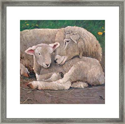 Mother And Lamb Framed Print by John Reynolds