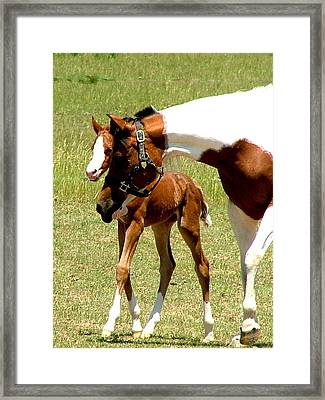 Mother And Newborn Framed Print by Donna Thomas
