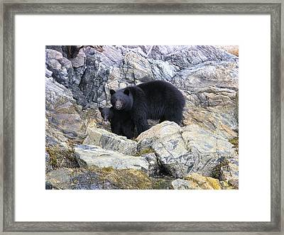Mother Bear And Her Cub Framed Print