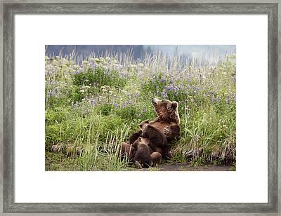 Mother Bear Nursing In All The Beauty Of Alaska Framed Print by Linda D Lester