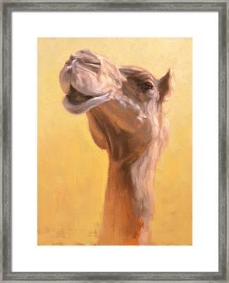 Mother Camel Framed Print