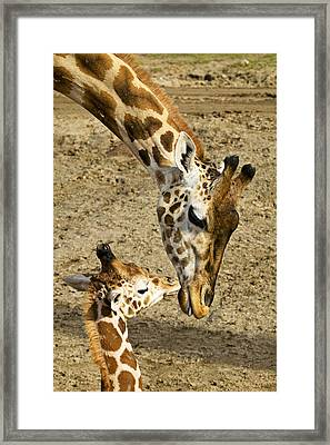 Mother Giraffe With Her Baby Framed Print by Garry Gay