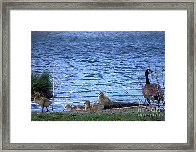 Mother Goose And Goslings Framed Print by Bobbee Rickard