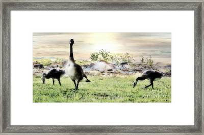 Mother Goose Framed Print by Anita Faye