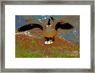 Mother Goose Guards Nest Framed Print by Chris  Taggart