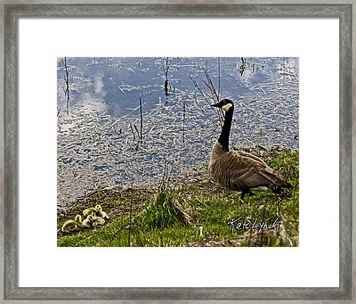 Mother Goose Framed Print by Kate Lynch