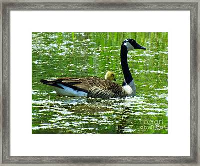 Mother Goose Framed Print by Robyn King