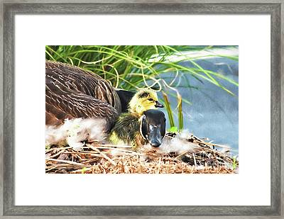Mother Goose With Newborn Gosling  Framed Print by Vizual Studio