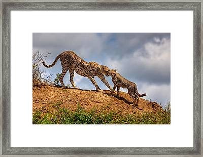 Mother Love Framed Print by Amnon Eichelberg
