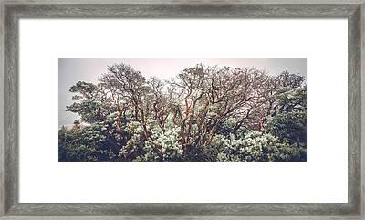 Framed Print featuring the photograph Mother Manzanita by Alexander Kunz