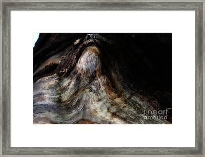 Mother Nature Framed Print by Eva Maria Nova