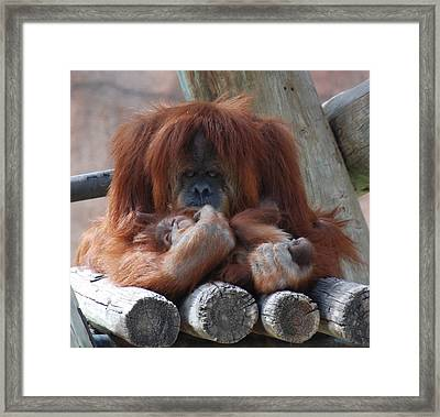 Mother Taking Care Of Her Baby Dream Framed Print