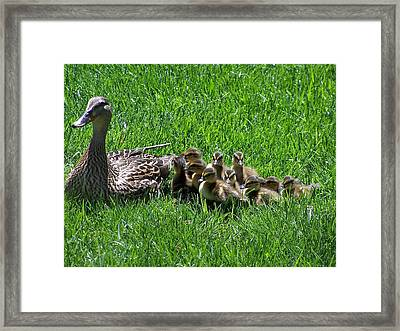 Motherhood Framed Print by Vijay Sharon Govender