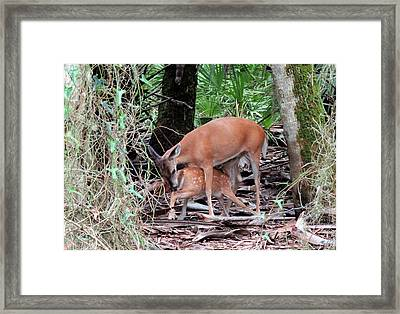 Mother's Care Framed Print by Rosalie Scanlon