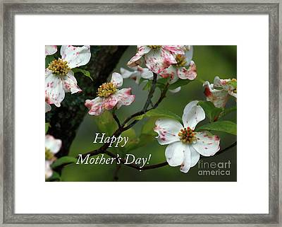 Framed Print featuring the photograph Mother's Day Dogwood by Douglas Stucky