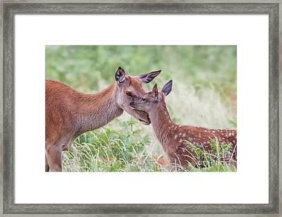 Framed Print featuring the photograph Mothers Love by Paul Farnfield