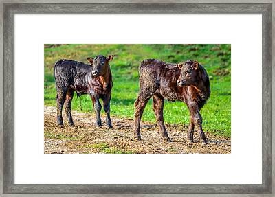 Mother's Moo Framed Print