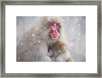 Mother's Warmth Framed Print by Takeshi Marumoto