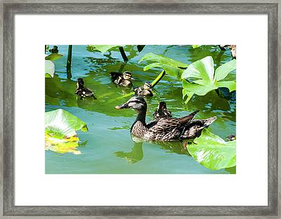 Mother's Watch Framed Print
