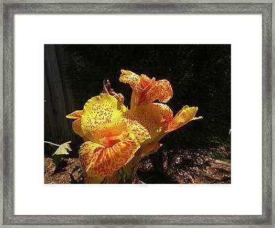 Mottled Canna Lilly Framed Print by Wayne Skeen
