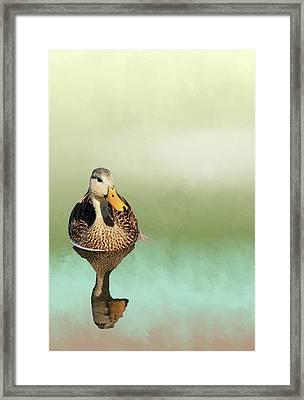 Mottled Duck Reflection Framed Print by Rosalie Scanlon
