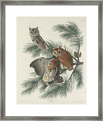 Mottled Owl Framed Print by Rob Dreyer