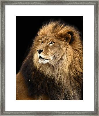 Moufasa The Lion Framed Print by Ann Bridges