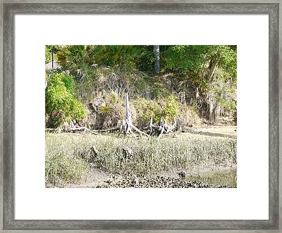 Moultrie Creek 1 Framed Print by Bea Godwin