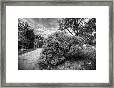Mount Auburn Cemetery Beautiful Japanese Maple Tree Orange Autumn Black And White Framed Print