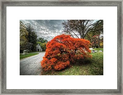 Mount Auburn Cemetery Beautiful Japanese Maple Tree Orange Autumn Colors Framed Print