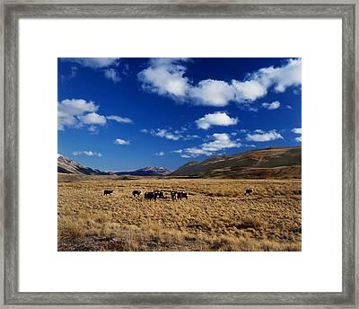 Mount Nicholas Station New Zealand Framed Print