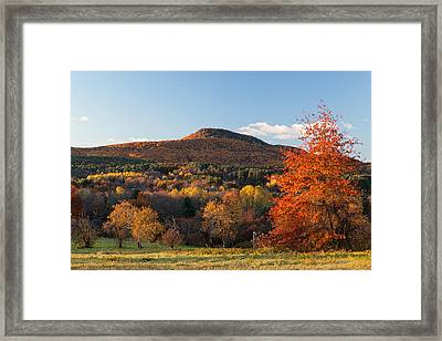 Mount Norwottuck In Fall Color From Mount Pollux. Framed Print