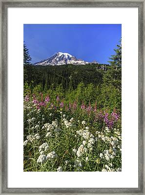 Mount Rainier Framed Print by Adam Romanowicz