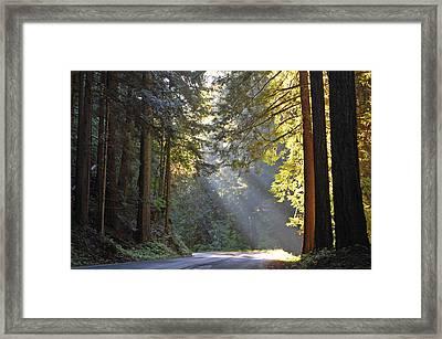 Mount Rainier At Nisqually Framed Print