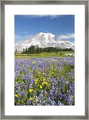 Mount Rainier National Park Framed Print by Craig Tuttle