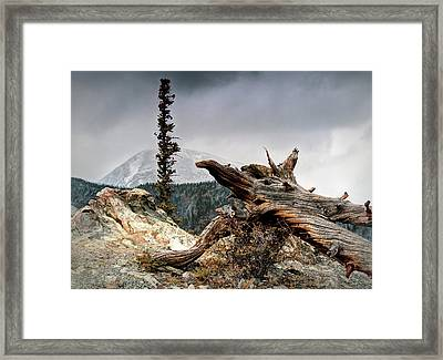Mount Royal Framed Print