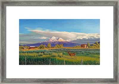 Mount Shasta Framed Print by Paul Krapf
