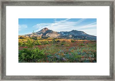 Mount St Helens Fields Of Wildflowers Framed Print by Mike Reid